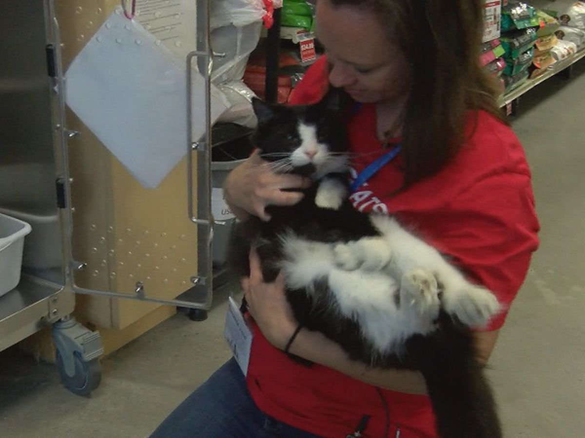 Petsense holds Adopt an Angel event
