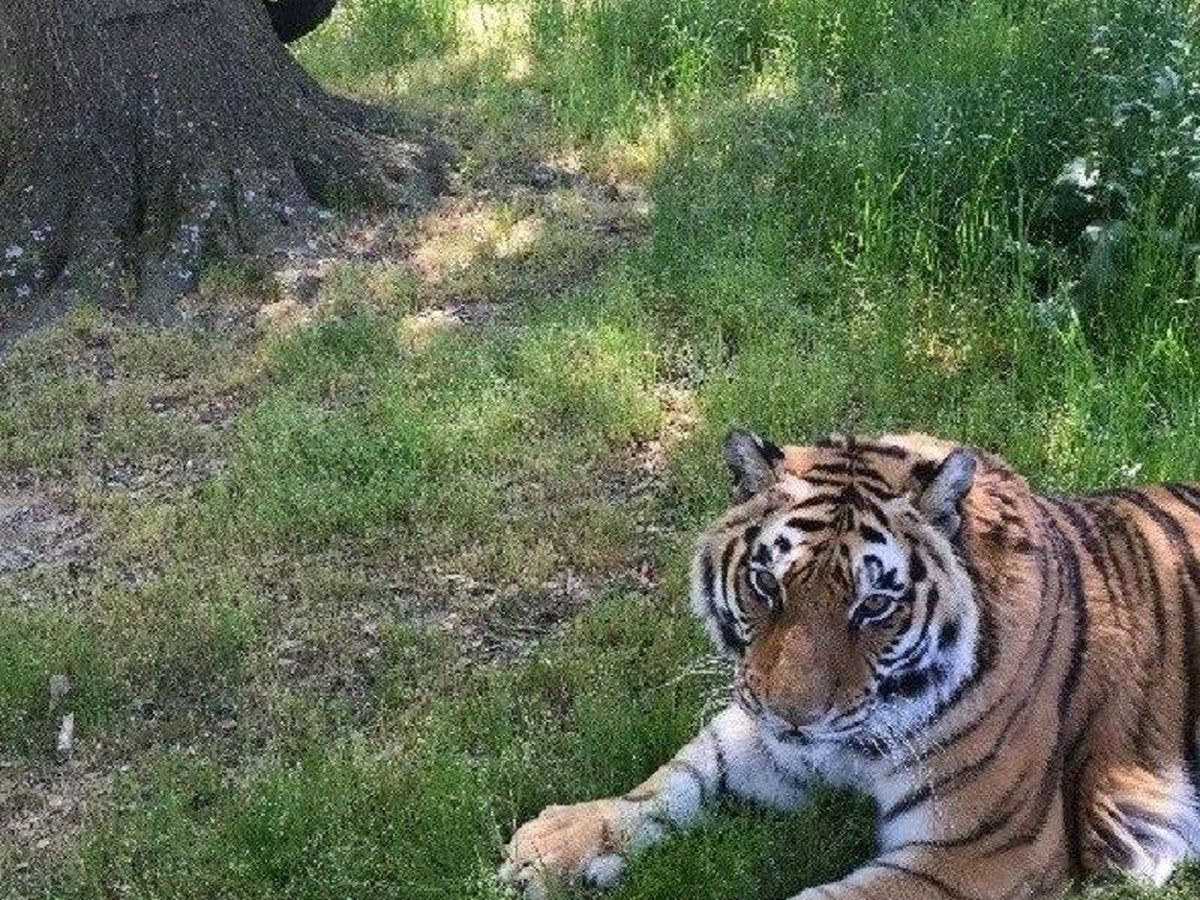 Highway 6: Wild cat rescue slated to open in Fair Bluff 2021