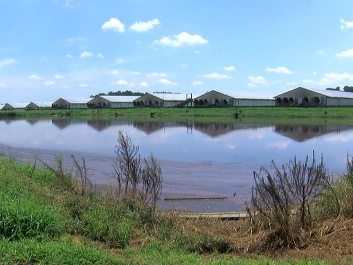Smithfield agrees to cap most of its hog lagoons