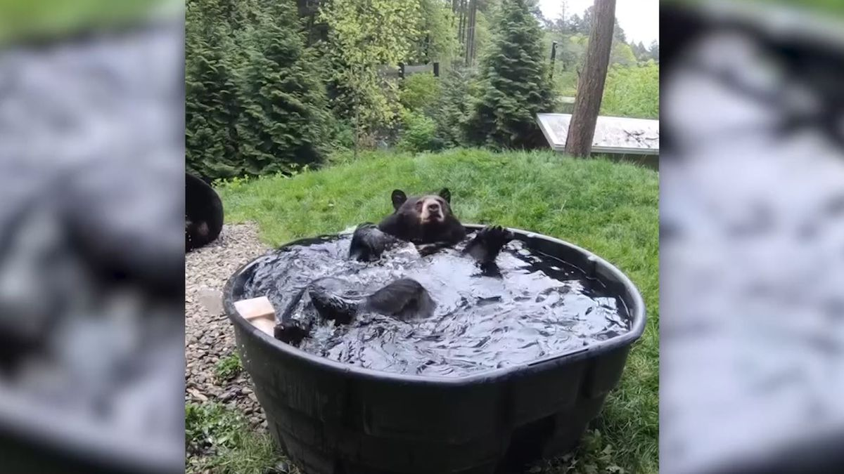 This Oregon Zoo black bear is living his best life in a massive tub