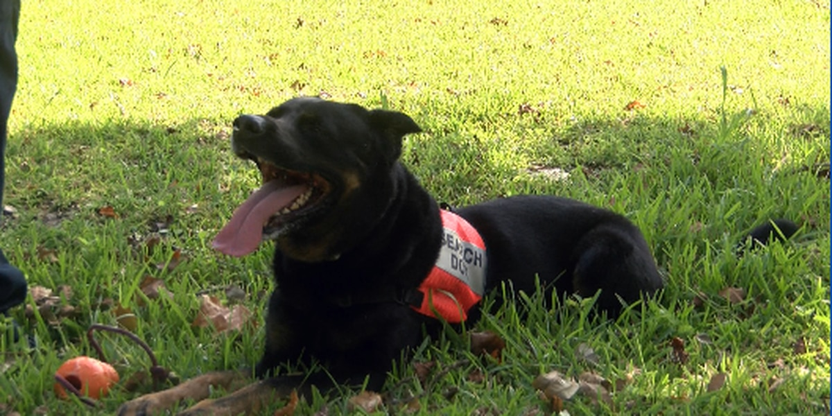 K9 Search and Rescue team helps locate homeless ahead of Dorian