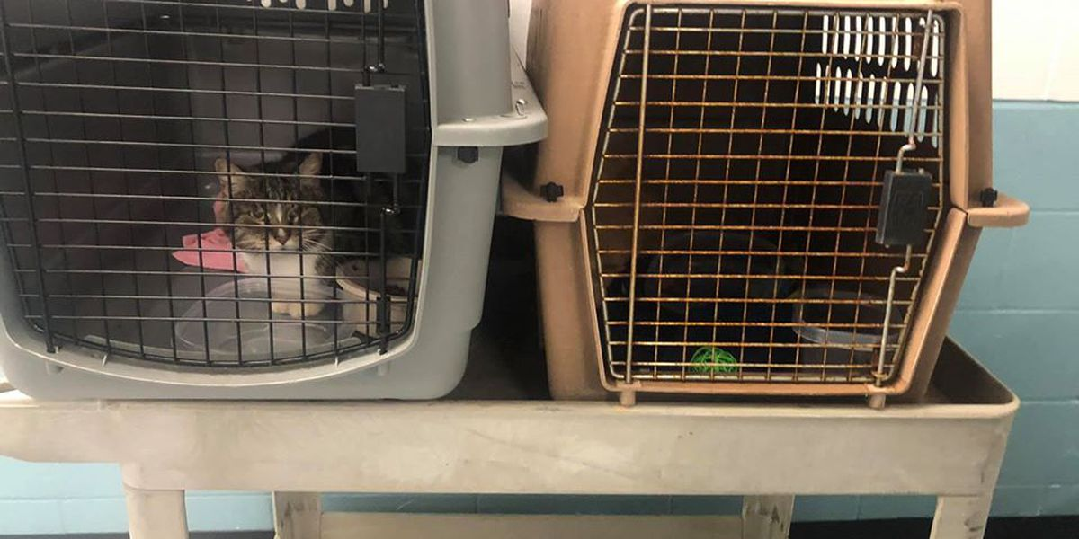One of two cats illegally dumped at Humane Society finds new home