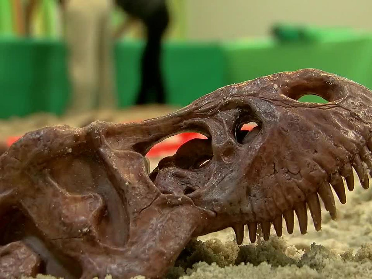 Dig for your own fossils this weekend at Dinosaur Family Day