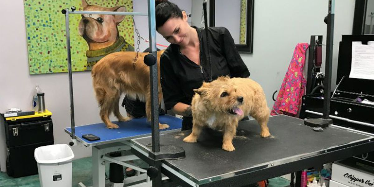 Pet groomer gets bottled water for customers