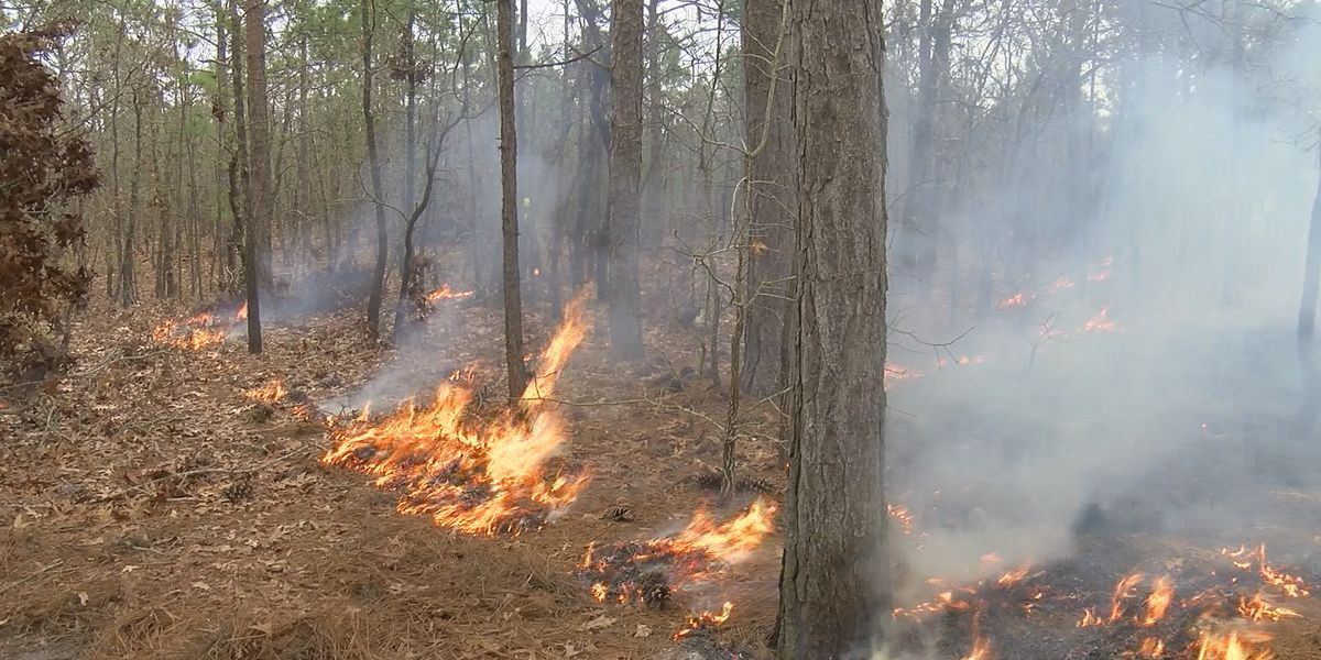See smoke in the area? Orton Plantation is conducting controlled burn today