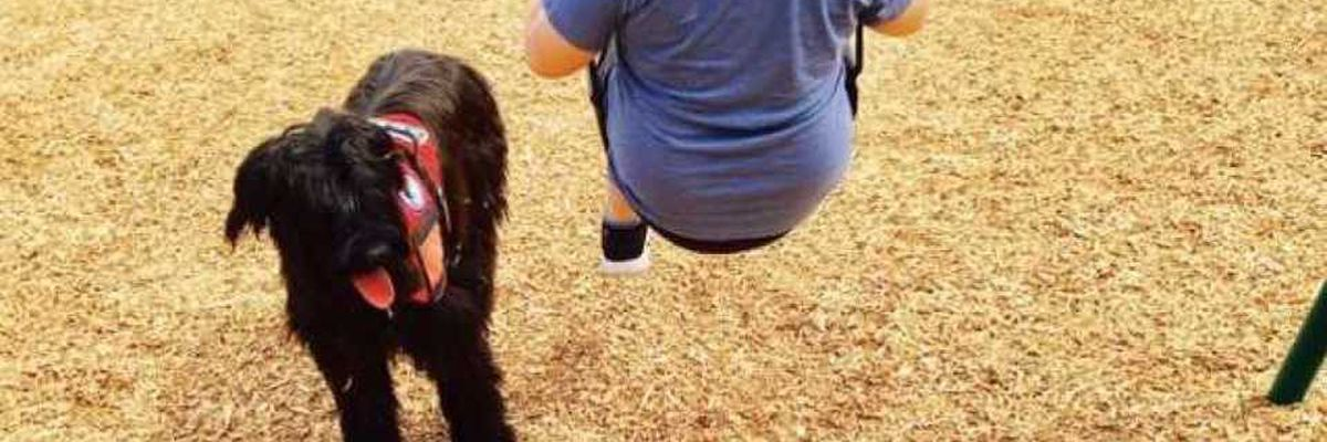 President of Raleigh service dog company indicted on 42 fraud-related charges