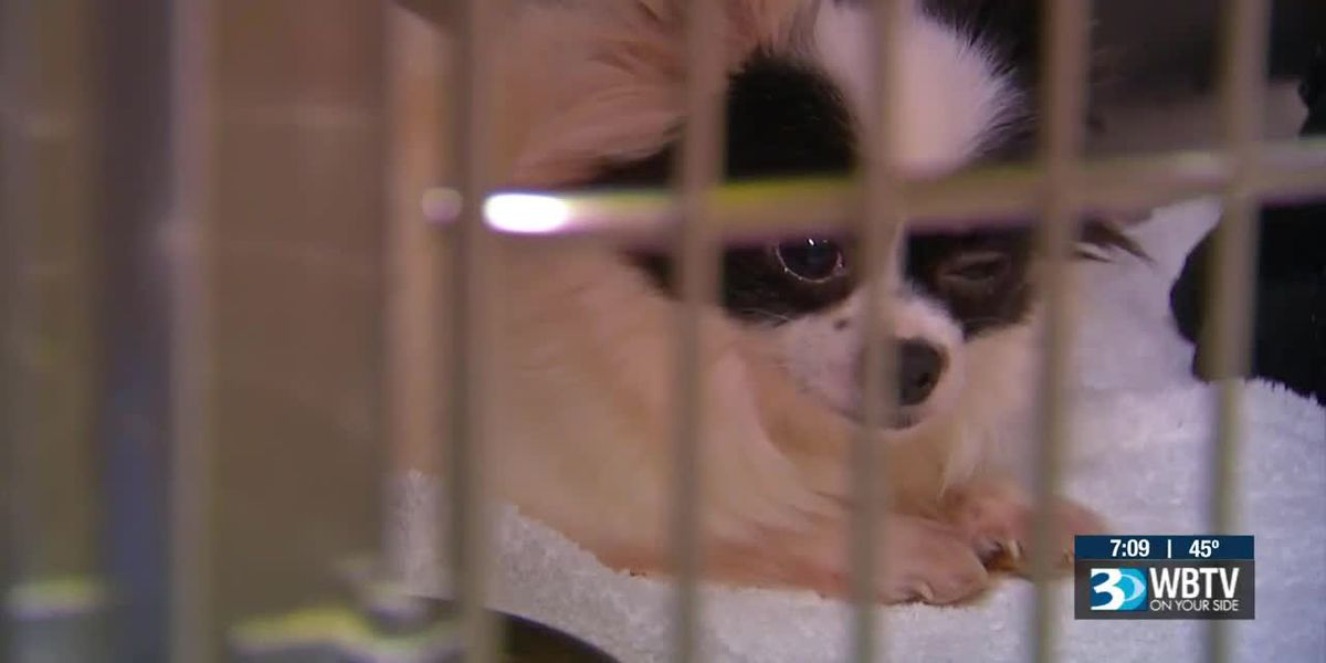 Dogs rescued from 'monstrous' puppy mill arrive at Humane Society of Charlotte