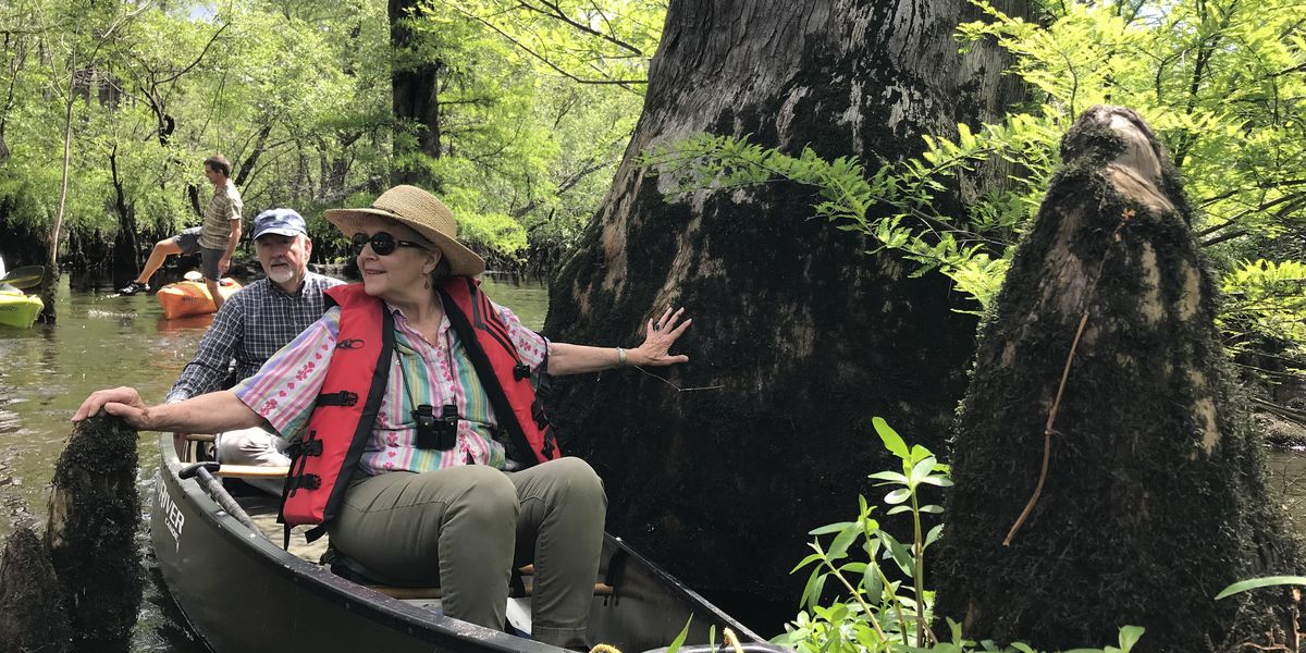 World's fifth-oldest tree discovered in Bladen County