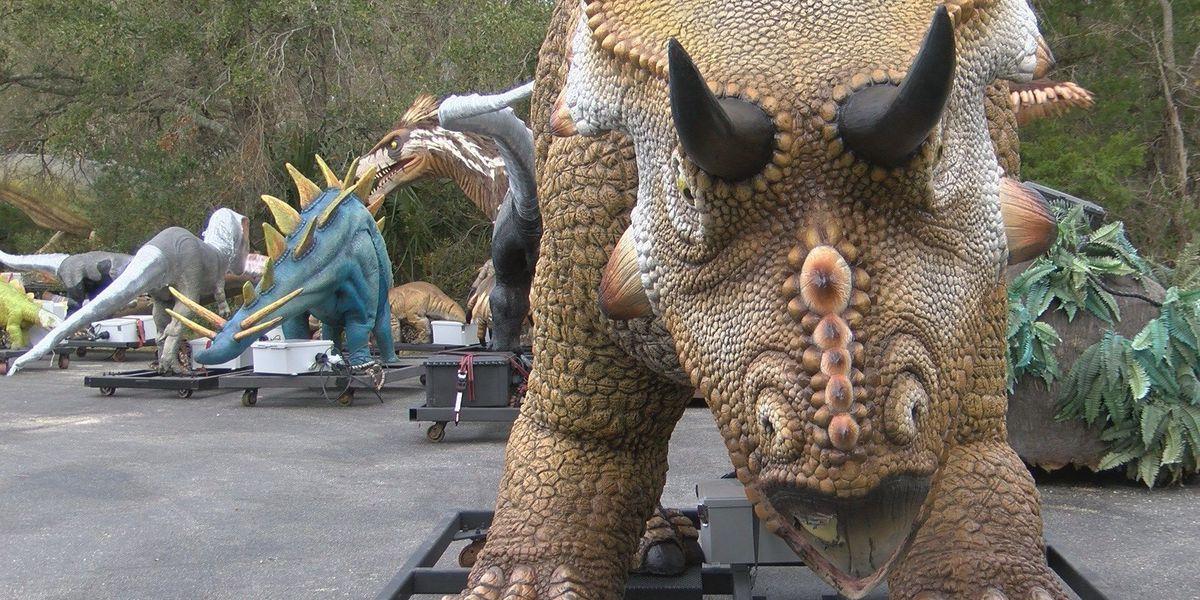 Girl meets dinosaur she helped design at the NC Aquarium