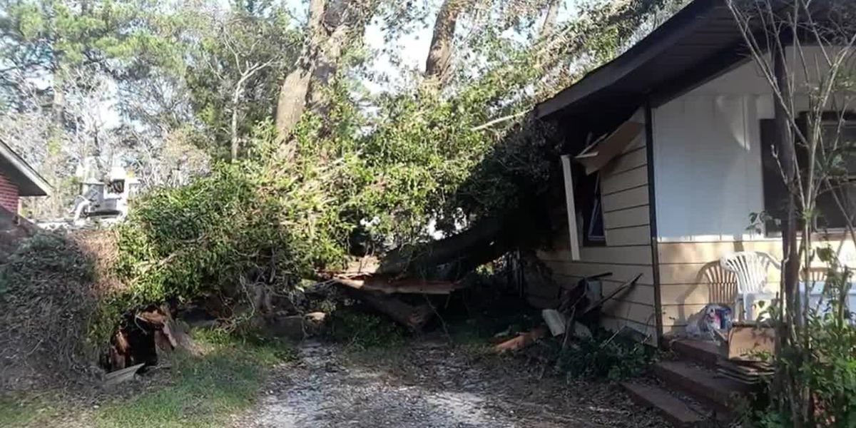 Hometown Hero: Lemonade stand leads to tree company removing 100-year-old tree from Florence damaged
