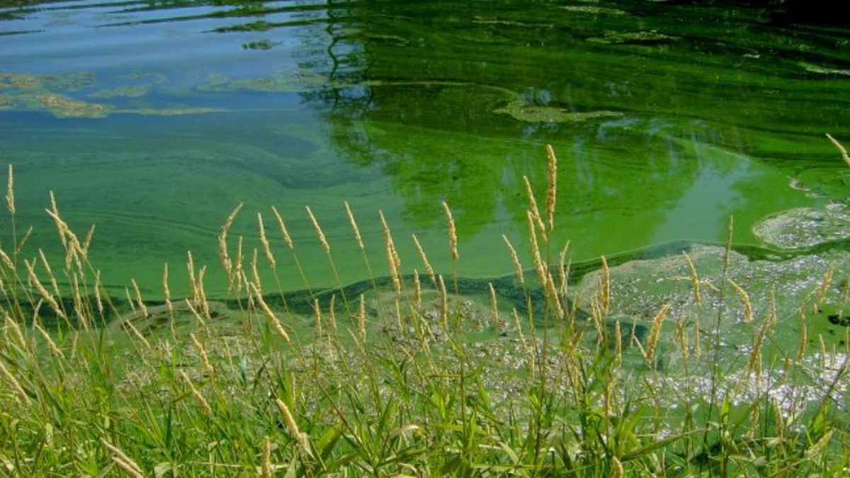 Toxic algae suspected of killing three NC dogs can have human health impacts