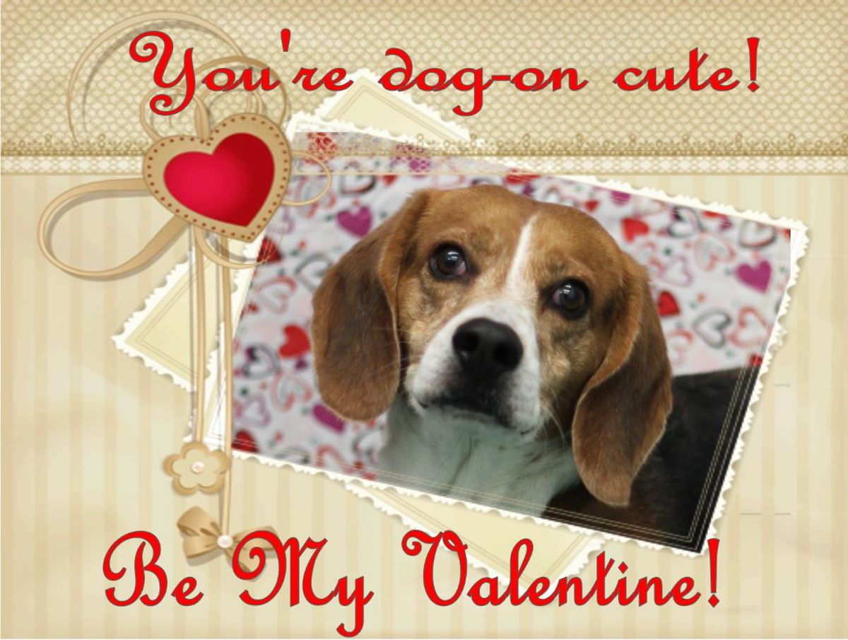 Puppy Love New Hanover Co Animal Services Creates Valentine Profiles For Pets