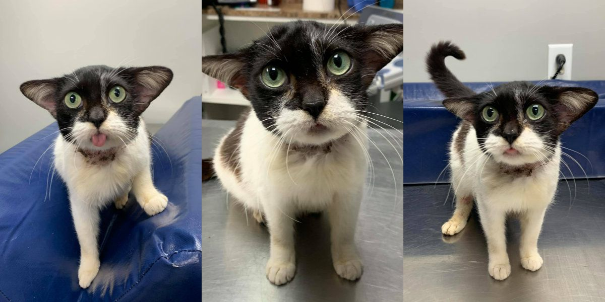 N.C. rescue cat garners national attention for resemblance to Baby Yoda