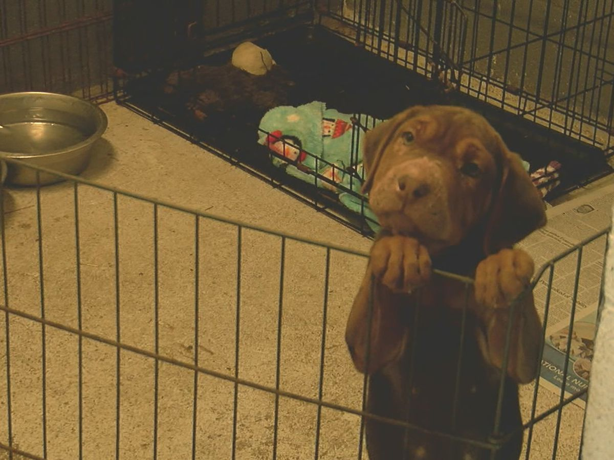 Pender County Humane Society raises money for animals ahead of National Rescue Dog Day