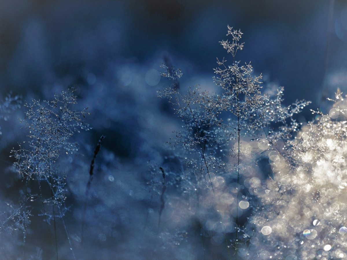 Final frost, freeze forecast for southeast North Carolina