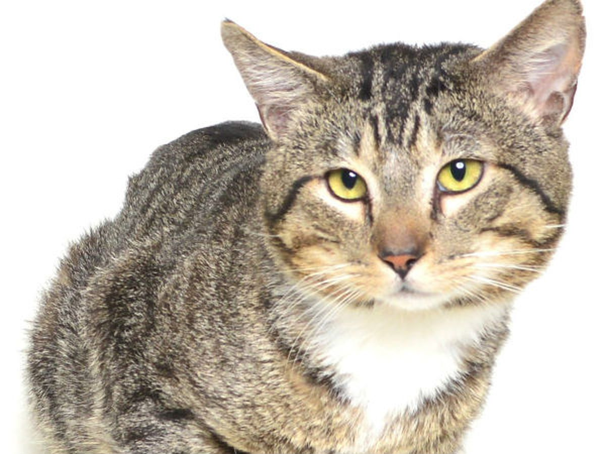 Pender Co. Animal Shelter desperate for cat adoptions as shelter hits capacity