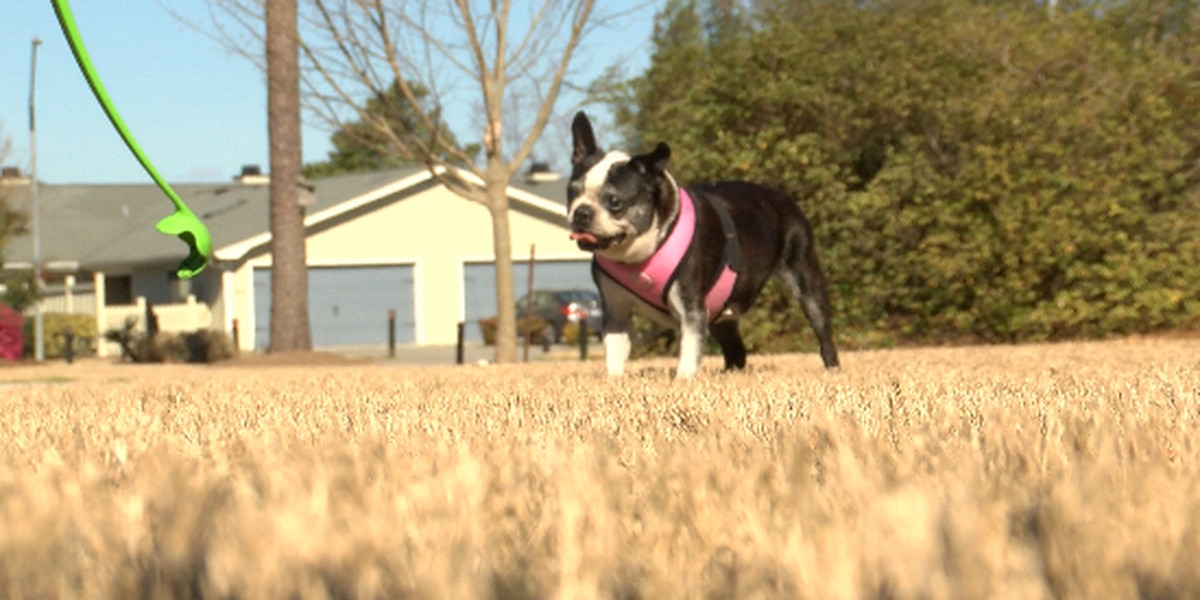 CBD for dogs popular among owners; vets warn of quality control