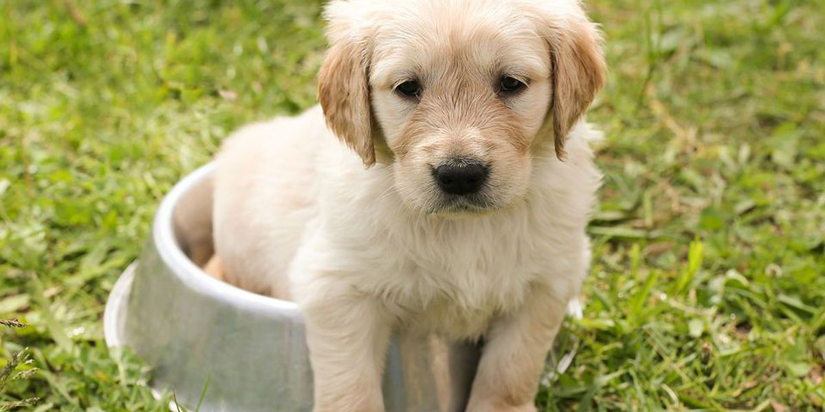Are you ready for a pet? Take the quiz!