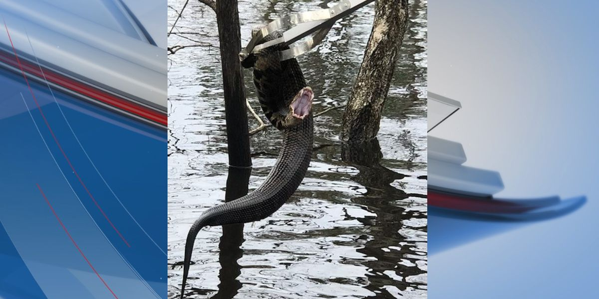 'SSS-TAY SAFE': Horry County police warn of snakes, other wildlife in floodwaters