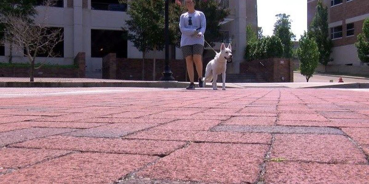 Vet recommends these tips for walking dogs in the heat