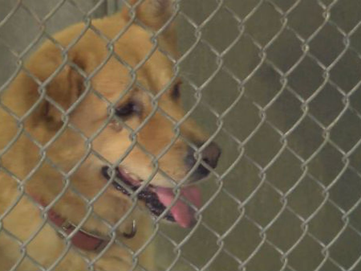 Clear the Shelters: Adoption fees waived Aug. 18