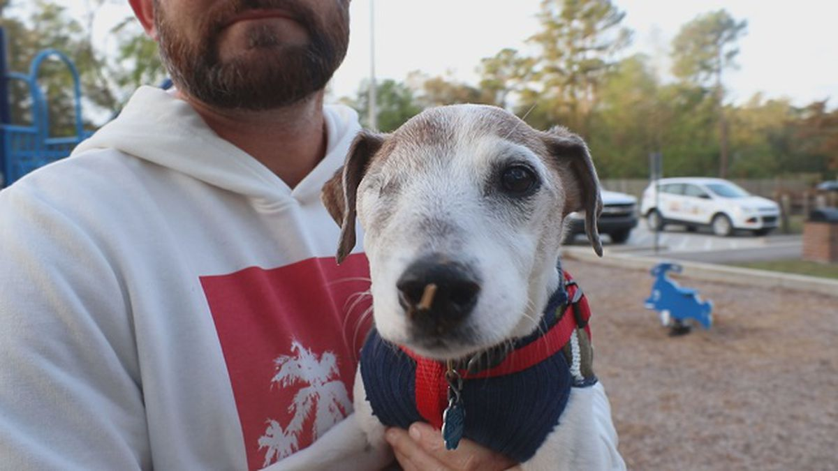 Bucket list dog with terminal cancer takes his final adventure