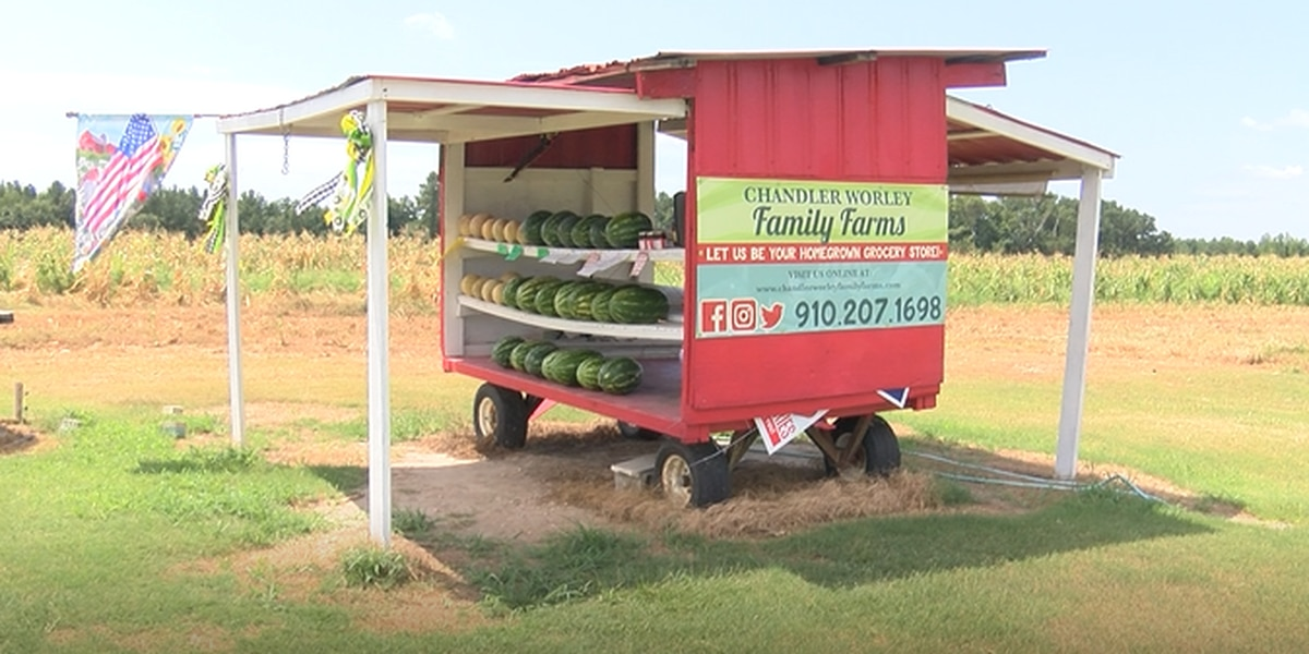 Highway 6: Fair Bluff farmers power through the heat for the perfect Watermelon