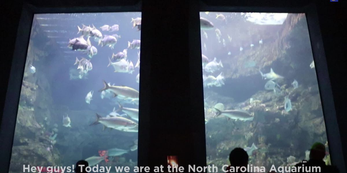 Highway 6 Pleasure Island: Behind-the-scenes tour of the NC Aquarium at Fort Fisher