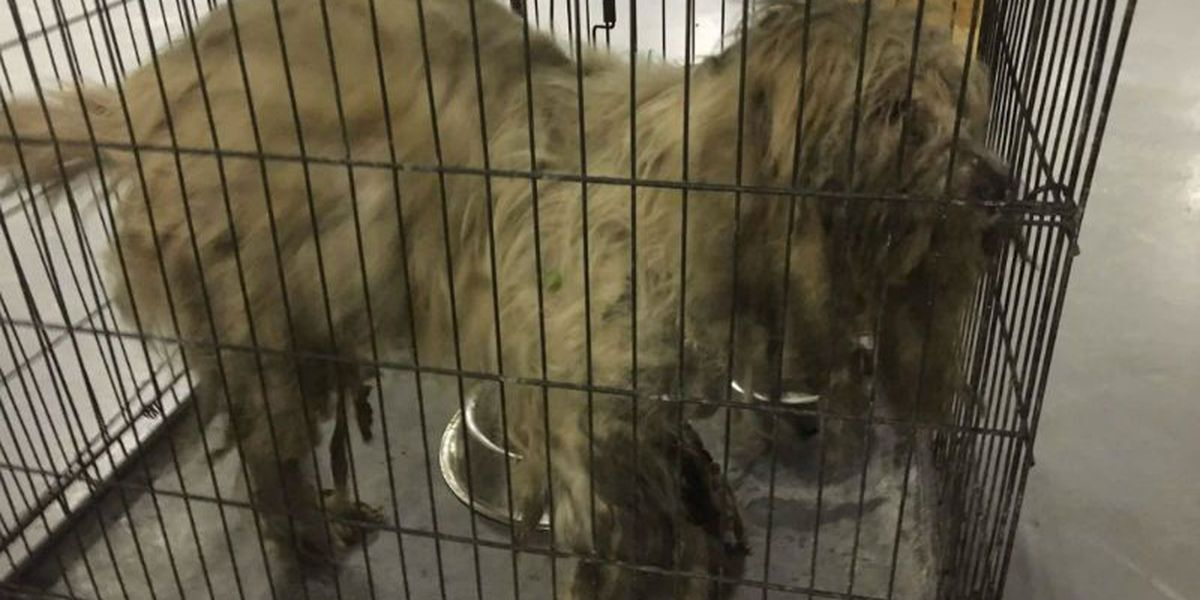 Dog in distress gets help from Columbus County shelter