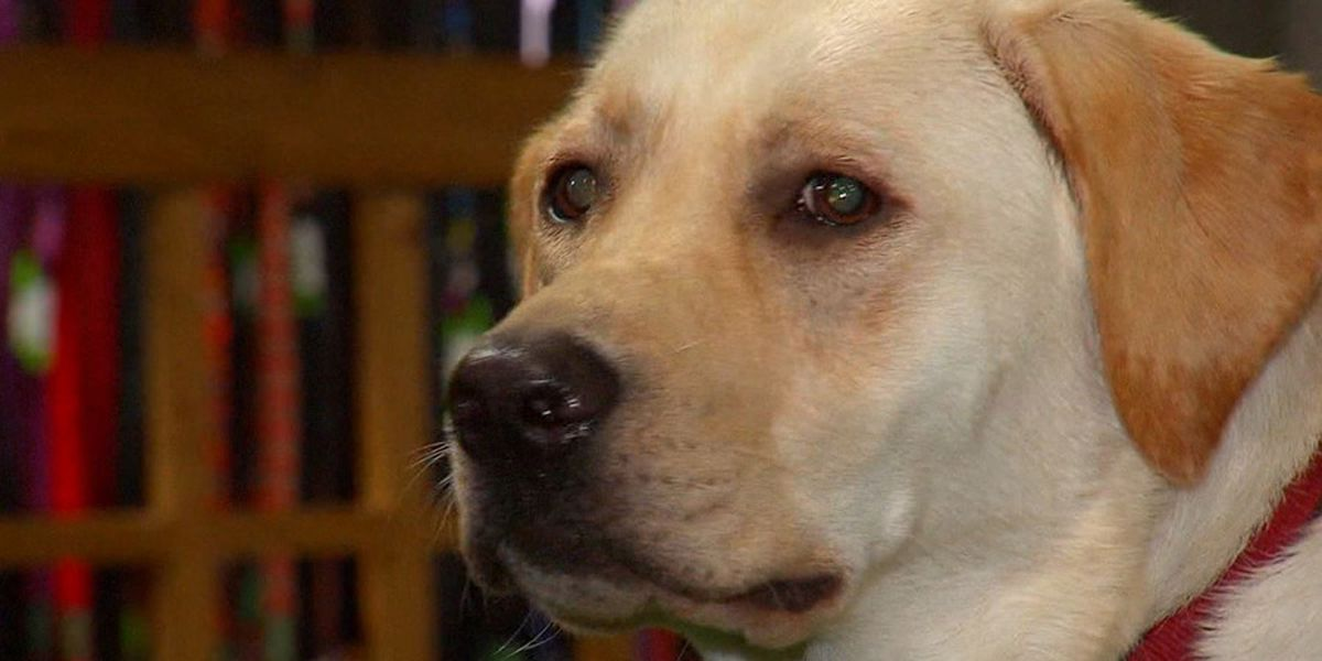 Health warning: Contact with some pet treats can give people salmonella