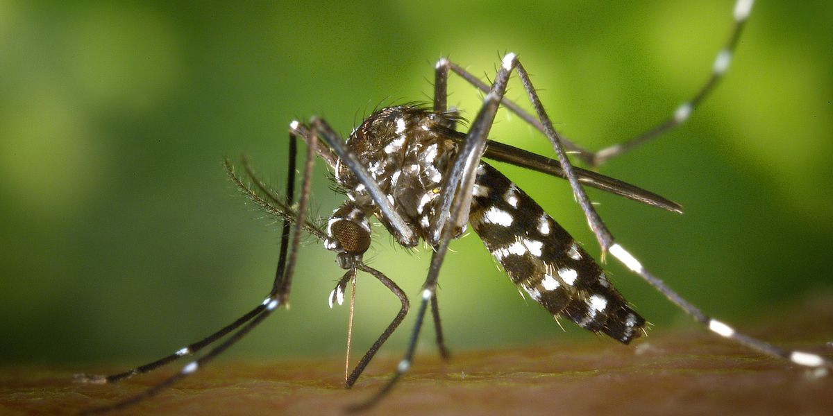 West Nile virus found in mosquitos in central Brunswick County