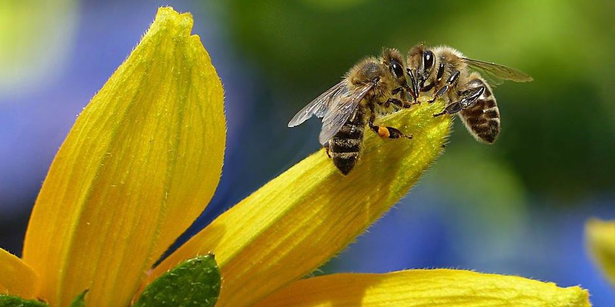 Columbus County could become first 'Bee County' in the United States