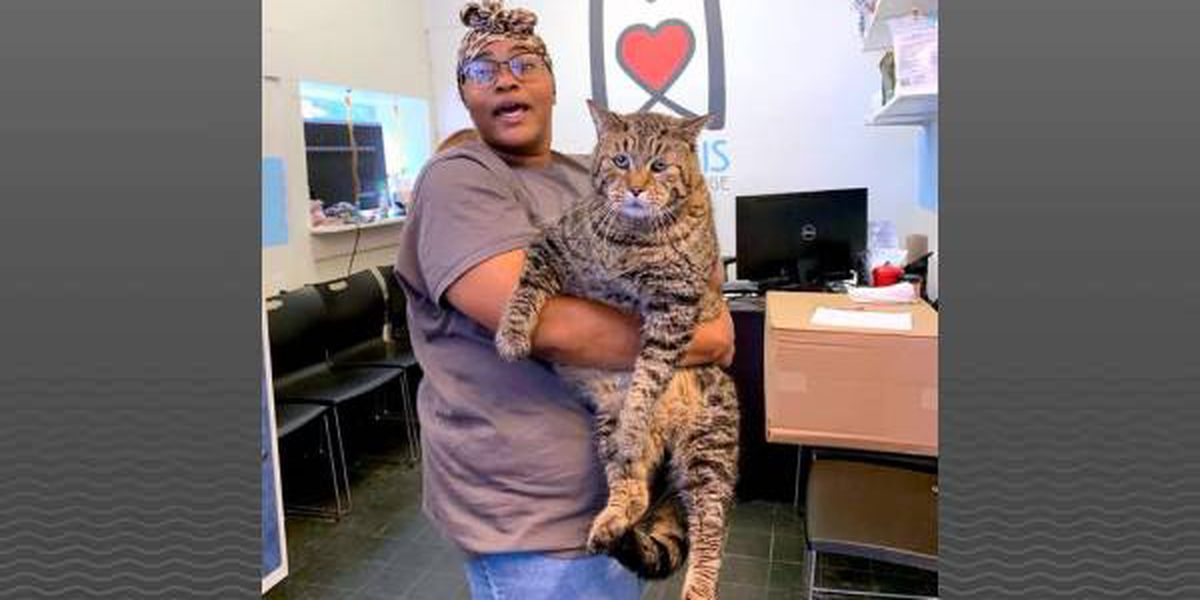 Full-figured feline looking for the purr-fect home