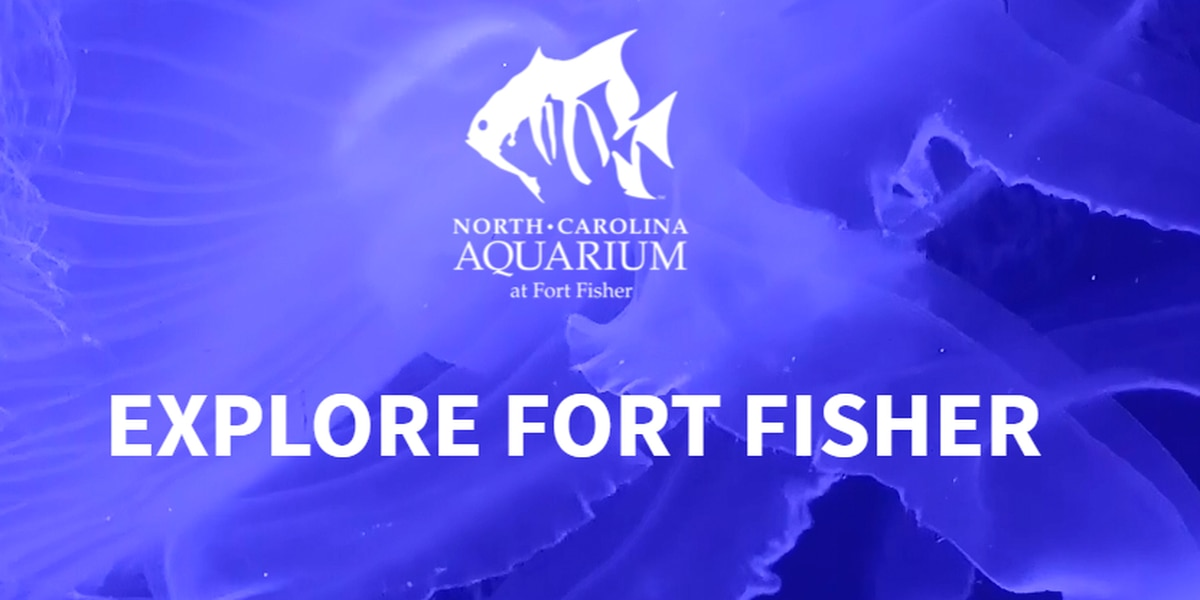 Local artists featured at the Aquarium at Fort Fisher