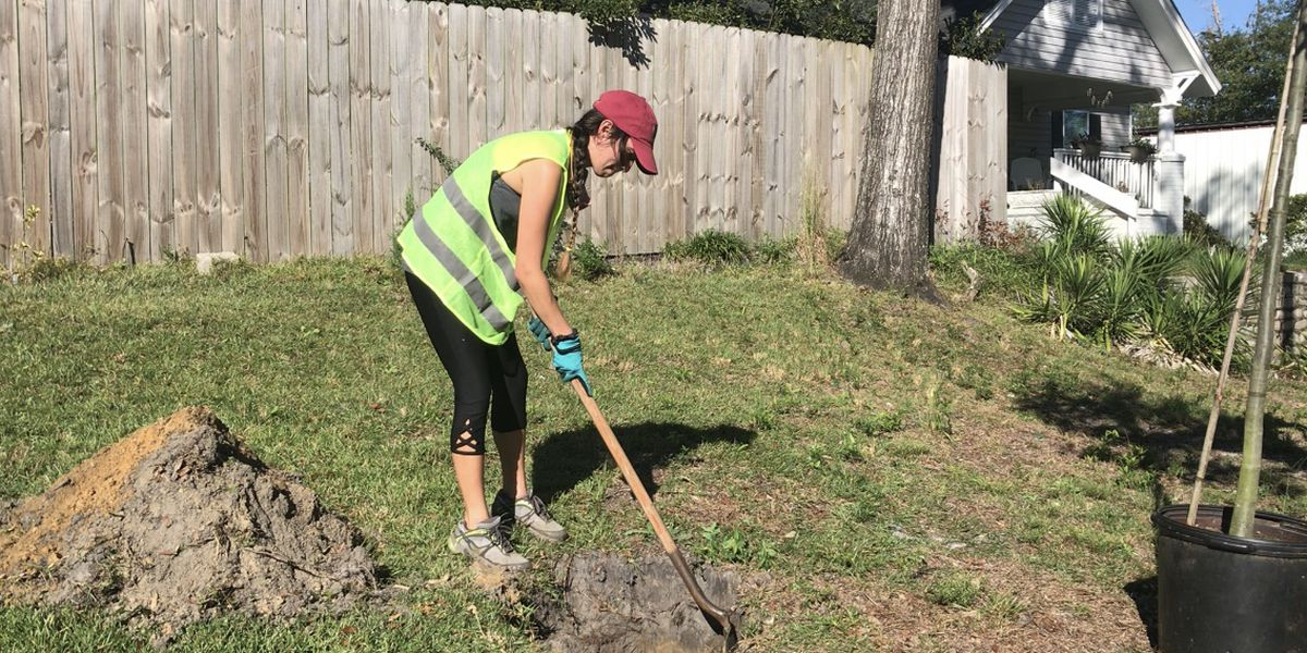 Tree planting event works to replace trees lost in storms, add to Wilmington's Tree Initiative