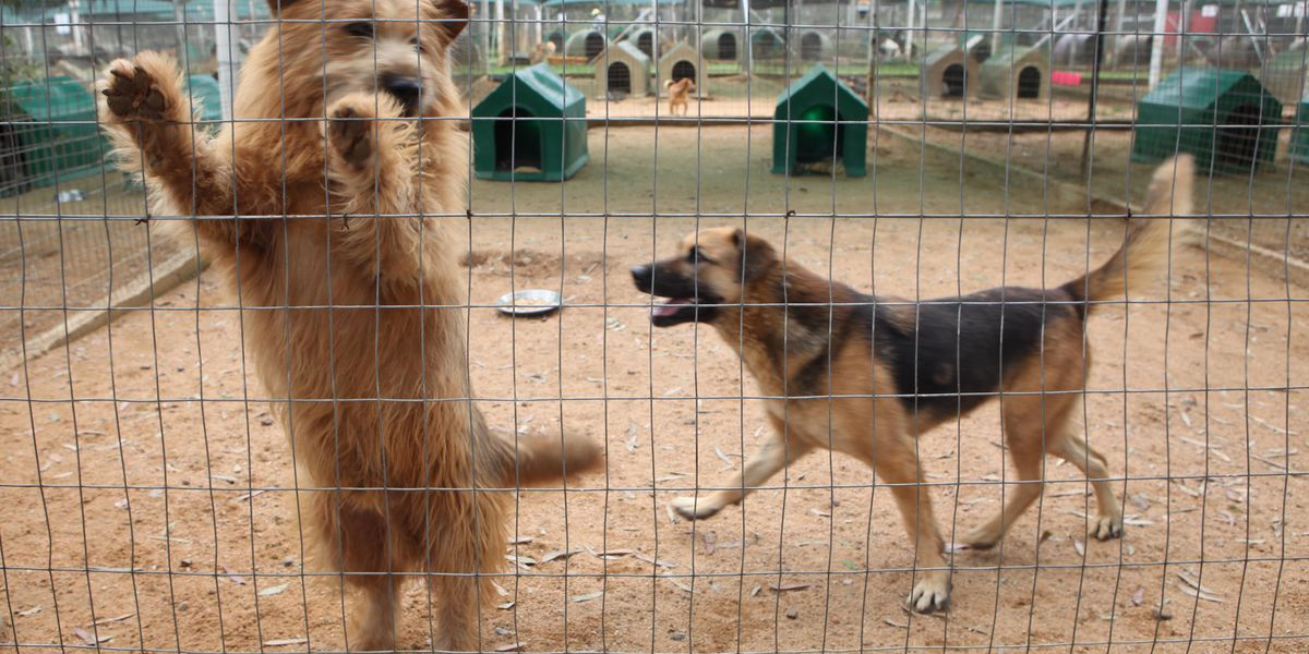 Proposed law would make animal cruelty a federal felony