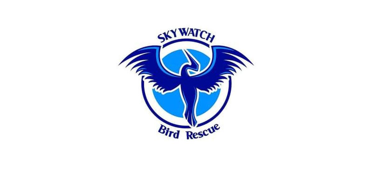 Skywatch Bird Rescue looking for volunteers for baby bird feeding team