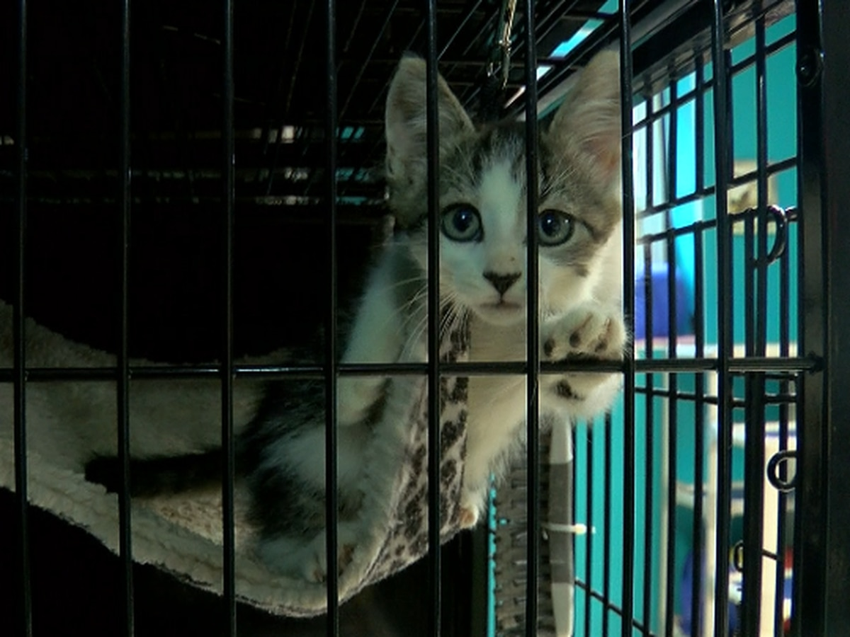 Clear the Shelters: Come find your FUR-ever friend in Brunswick Co.