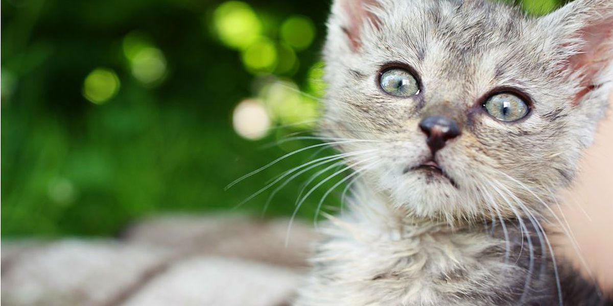 Adopting a pet: Laws and registration