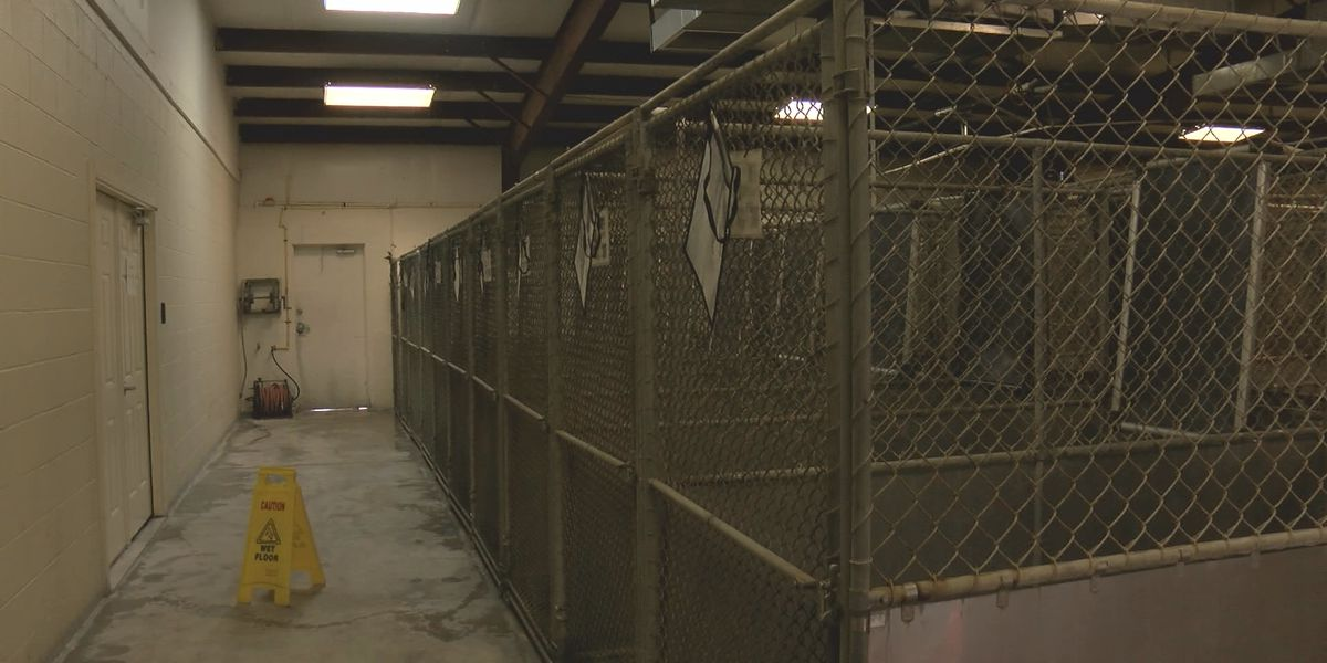 Sheriff starts renovations at Columbus County animal shelter, proposes more changes