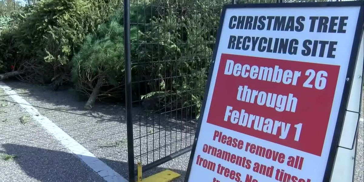 Here's how to recycle your Christmas tree in New Hanover Co.