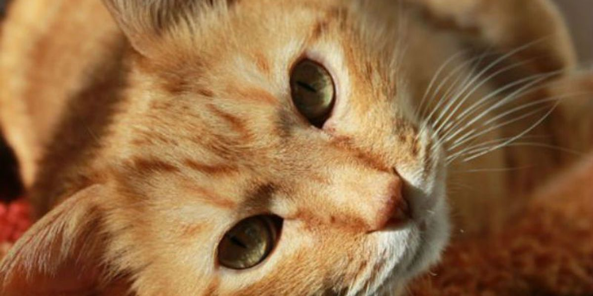 Aspiring cat cafe owner hopes to collect signatures for petition at pop up event