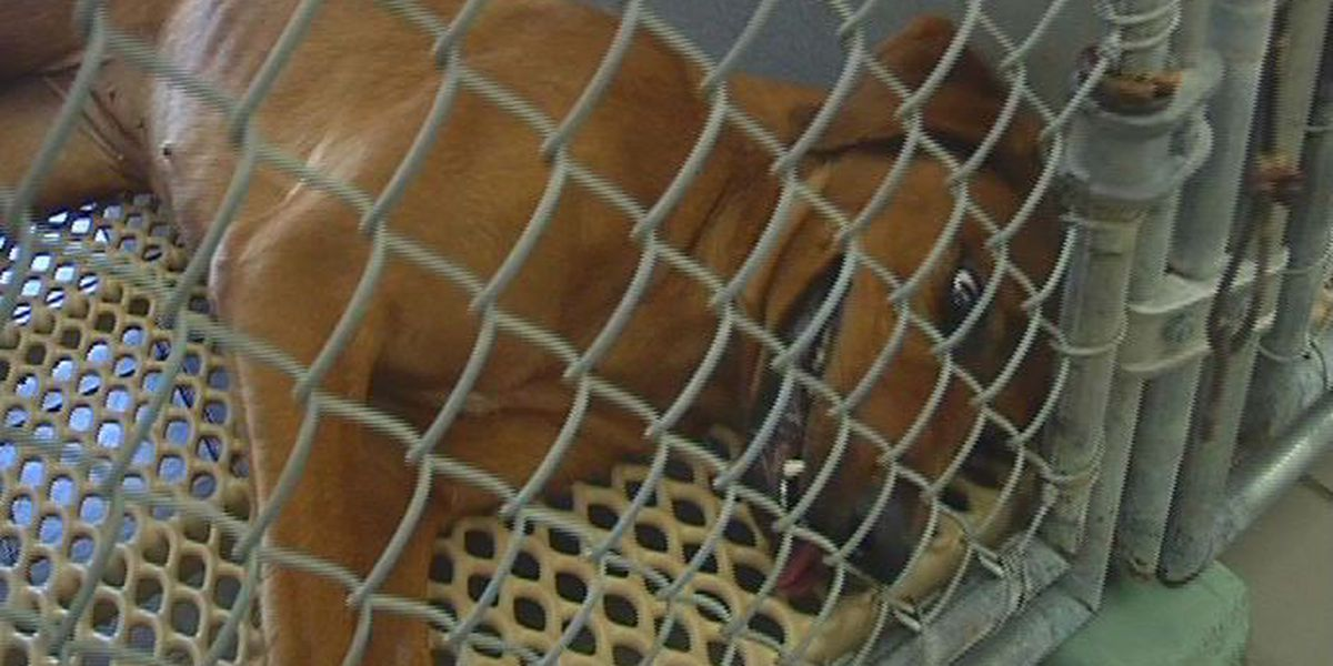 New Hanover County animal shelter closed
