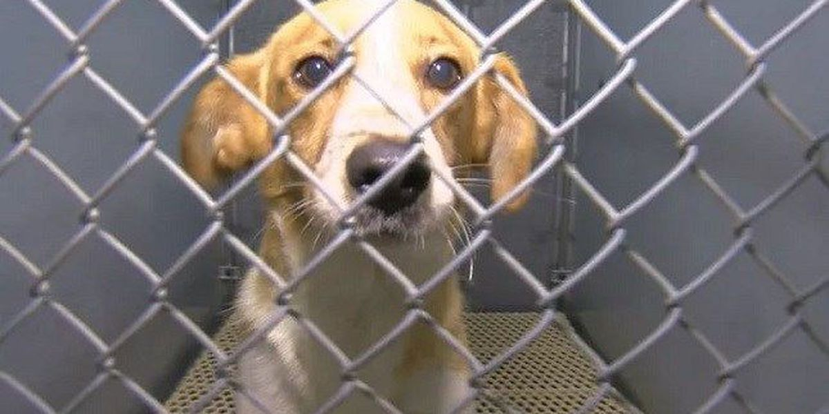 Clear the Shelters: How many animals were adopted in our area
