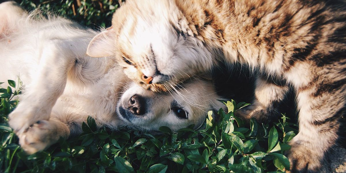 Give hope to vulnerable pets after Hurricane Florence