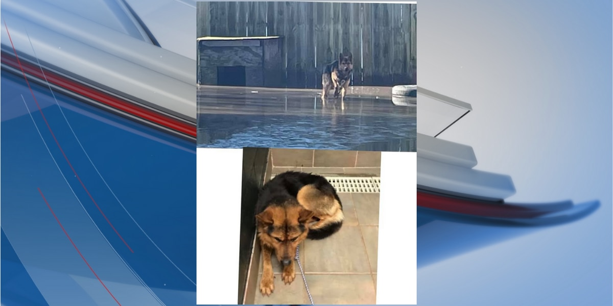 Robeson County deputies rescue another dog from floodwaters