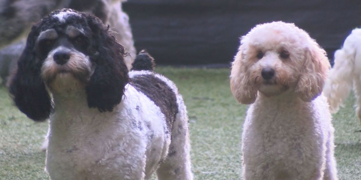 Dangerous bacterial disease on the rise for pets