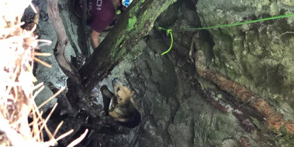 Dog trapped in 30-foot hole lured to safety with beef jerky