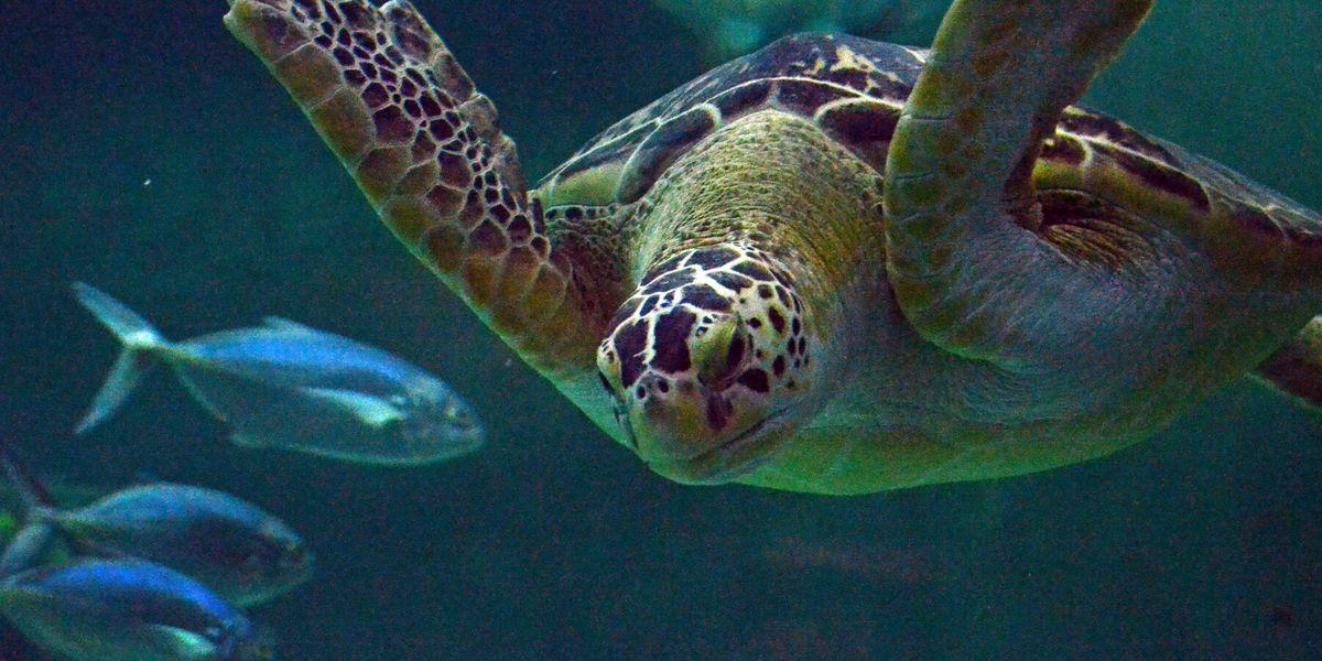 North Carolina aquariums in running for national award