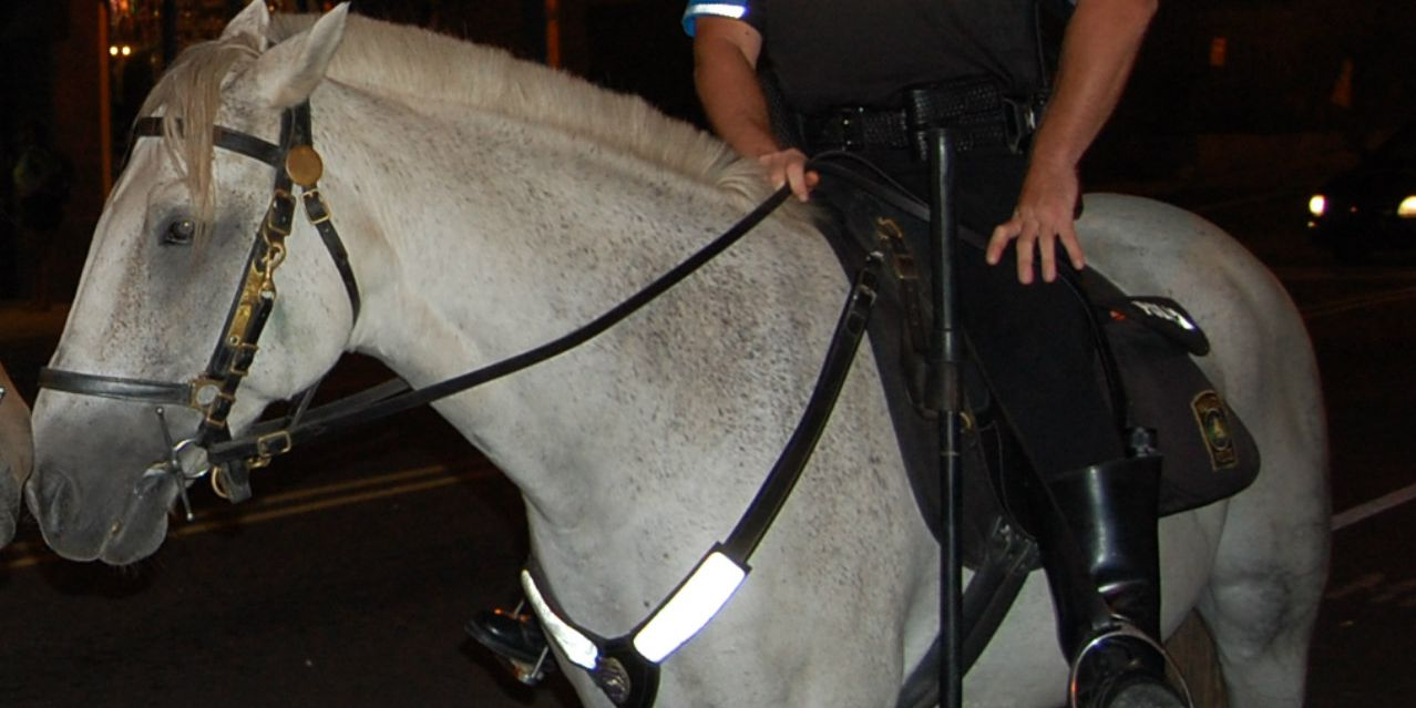 WPD horse, a 10-year member of Mounted Patrol Unit, has surgery to remove tumor